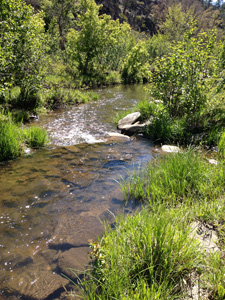 Photo of stream flowing through green riparian area