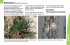 Thumbnail image of Onionweed webpage