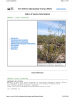 Thumbnail image of Creosote Bush webpage